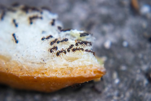 How Do I Get Rid of Ants Permanently?