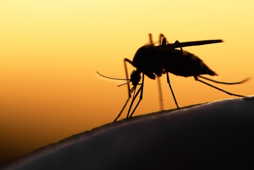 Can A Mosquito Bite Your Brain?